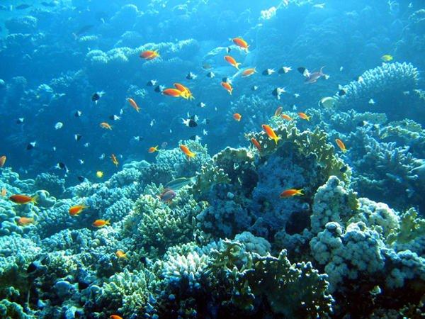 Les coraux meurent c'est une réalité bien triste dans Planéte hi_114964_reference